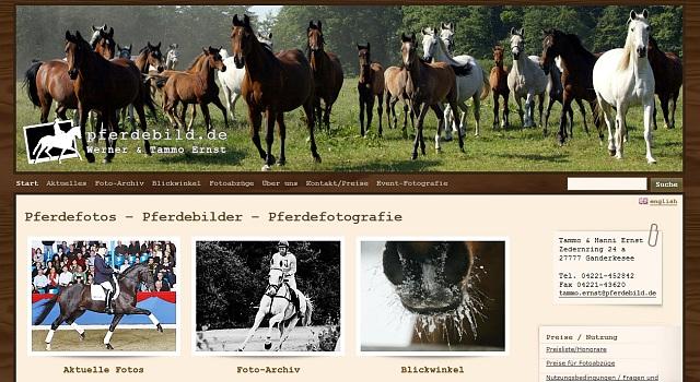 webdesign pferdebild