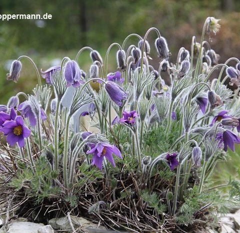 fruehling im botanischen garten oldenburg 001