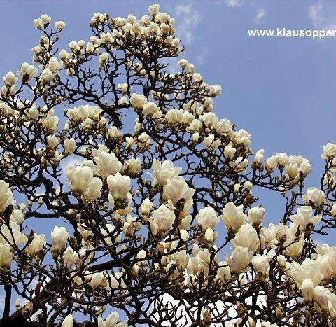 fruehling im botanischen garten oldenburg 002