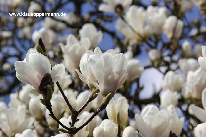 fruehling im botanischen garten oldenburg 003