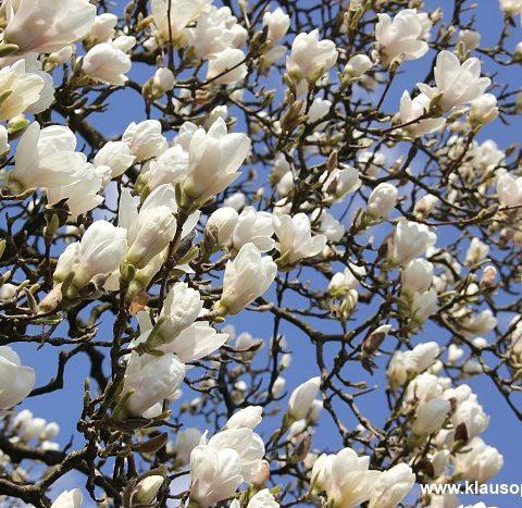 fruehling im botanischen garten oldenburg 004