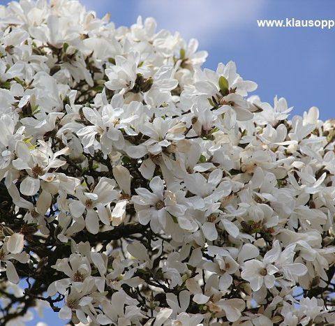 fruehling im botanischen garten oldenburg 005