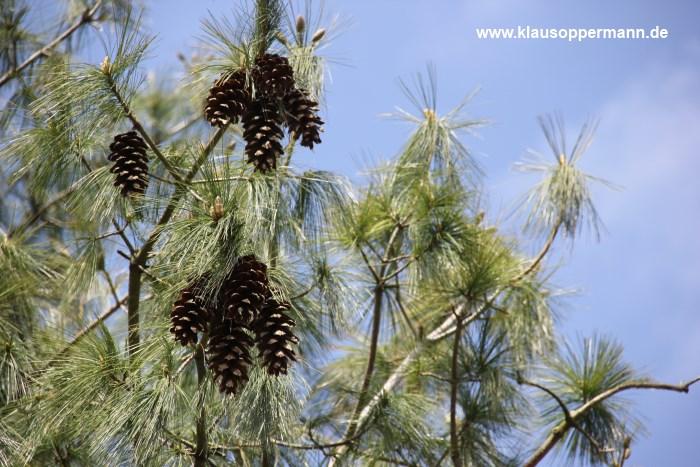 fruehling im botanischen garten oldenburg 006