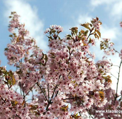 fruehling im botanischen garten oldenburg 009