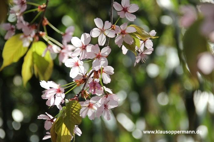 fruehling im botanischen garten oldenburg 010