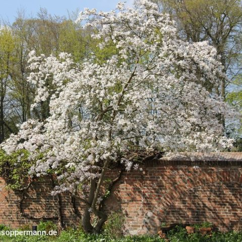 fruehling im schlossgarten oldenburg