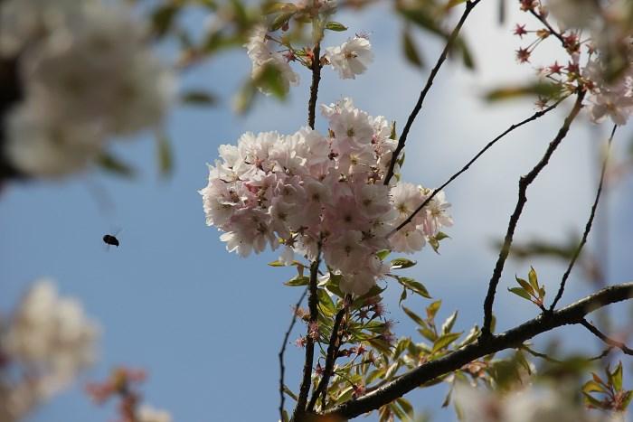 fruehling in oldenburg 001