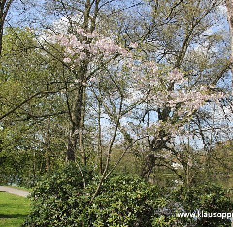 fruehling in oldenburg 002
