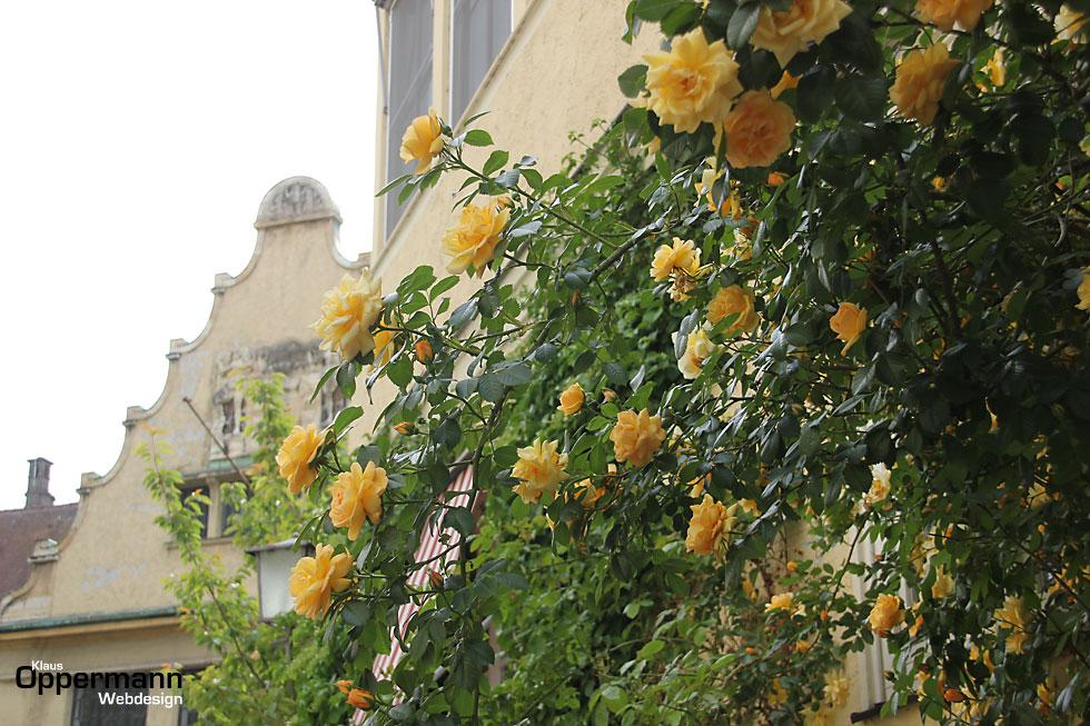 Lindau Bodensee Rosen Altstadt