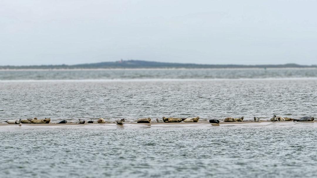 Robbenbank Segeln auf dem IJsselmeer