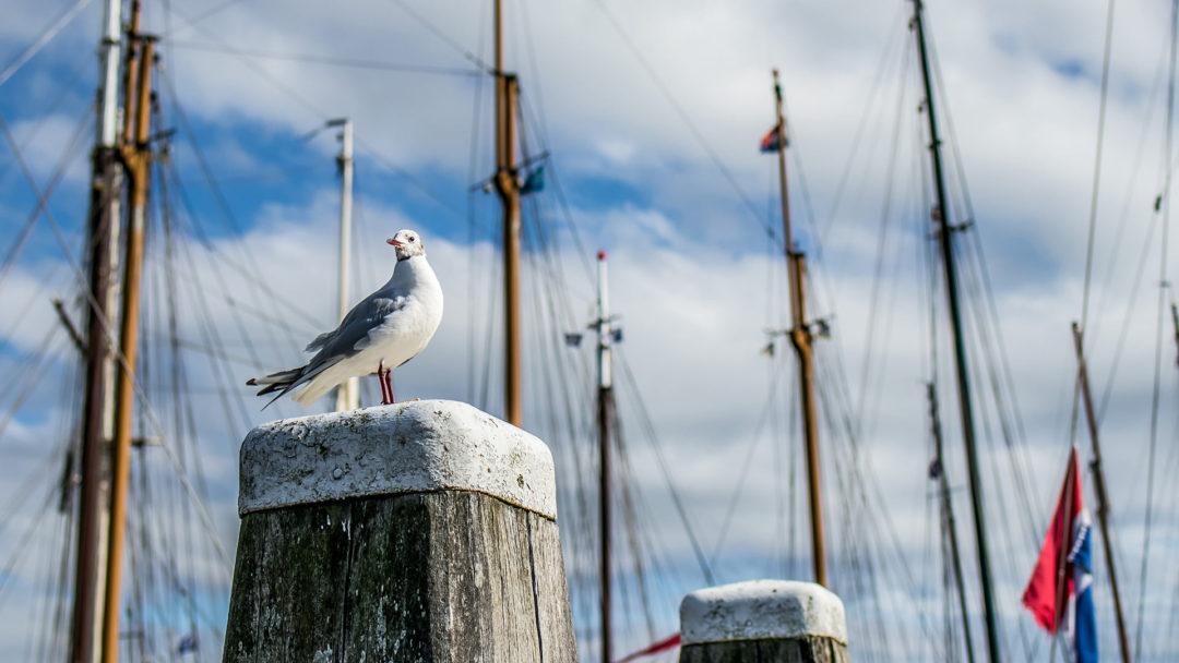 Terschelling 11 Segeln auf dem IJsselmeer